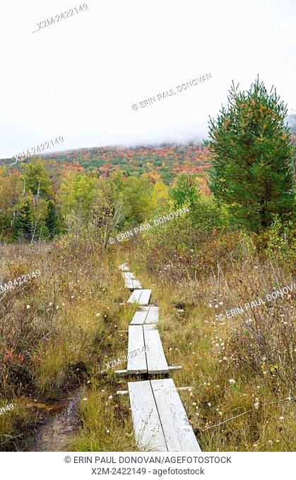 Puncheons on trail near Wildlife Pond in Bethlehem, New Hampshire USA during the autumn months