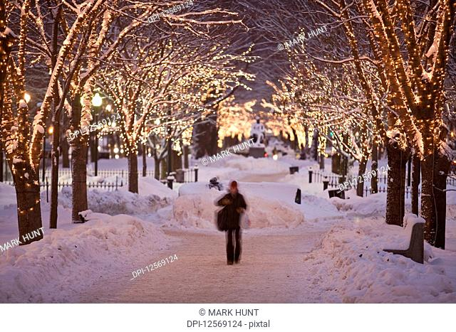 Decorated trees along an avenue in winter, Commonwealth Avenue, Boston, Massachusetts, USA