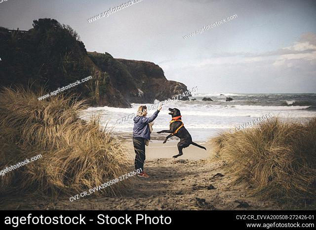 A woman with an infant is playing with a dog on the Californian beach
