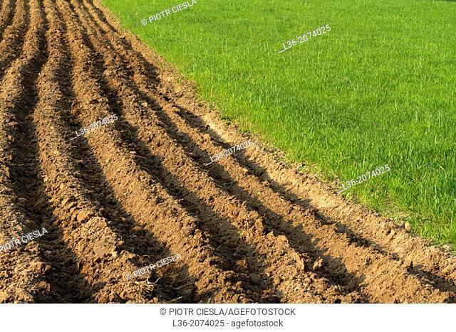 Farm motif. Poland