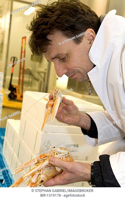 Francois PASTEAU, head of the L'Epi Dupin restaurant in the fish hall A4, Produits de la mer et d'eau douce, Rungis wholesale market near Paris, France, Europe