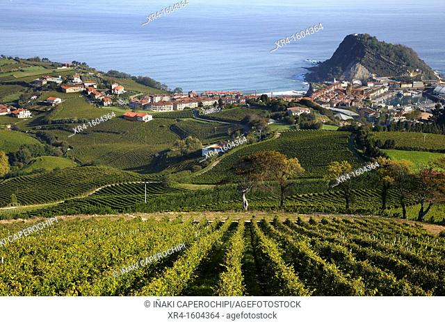 Vineyards of Txakoli, Getaria, Gipuzkoa, Basque Country, Spain