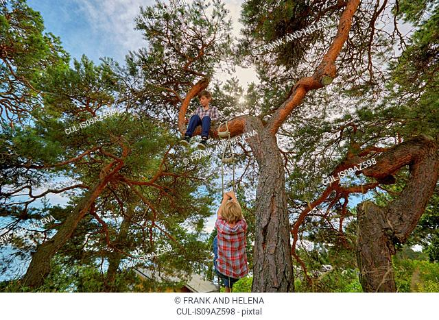 Young boy sitting in tree, his friend climbing rope ladder on tree to join him