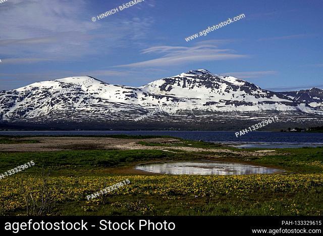 spring meadow in northern Norway, june 2020 | usage worldwide. - Kvalöya/Troms/Norway