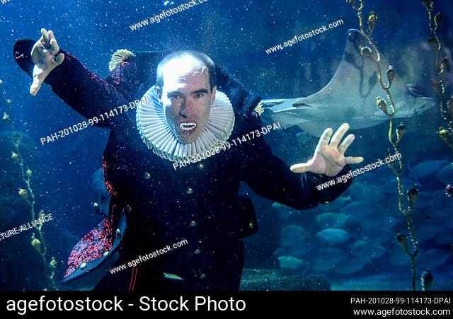 28 October 2020, Berlin: At Sea Life Berlin a diver in a vampire costume dives together with fish in the Atlantic basin. The reason for this is the upcoming...