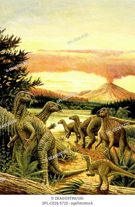 Iguanodon dinosaurs. Computer illustration of a herd of Iguanodon sp. dinosaurs feeding on plants in a prehistoric landscape