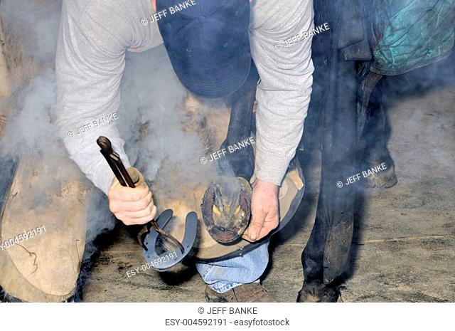 Farrier working on horse shoe