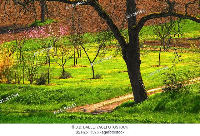 Spring by Montreal, Gers, Midi-Pyrenees, France