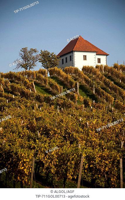Slovenia,country,the vineyard