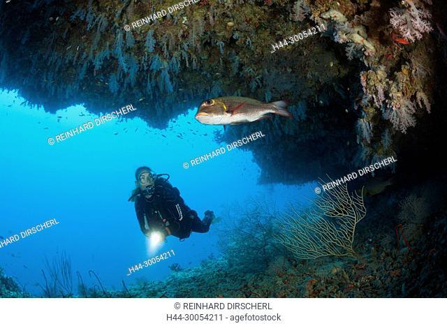 Scuba Diver exploring Overhang, Felidhu Atoll, Maldives