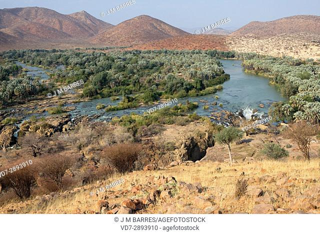 Epupa falls and Kunene river, border between Angola and Namibia. Riparian forest with real fan palm (Hyphaene petersiana)