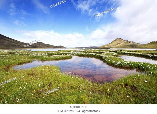 marshland, surrounded by rheolite mountains in Landmannarlaugar National Park, Iceland