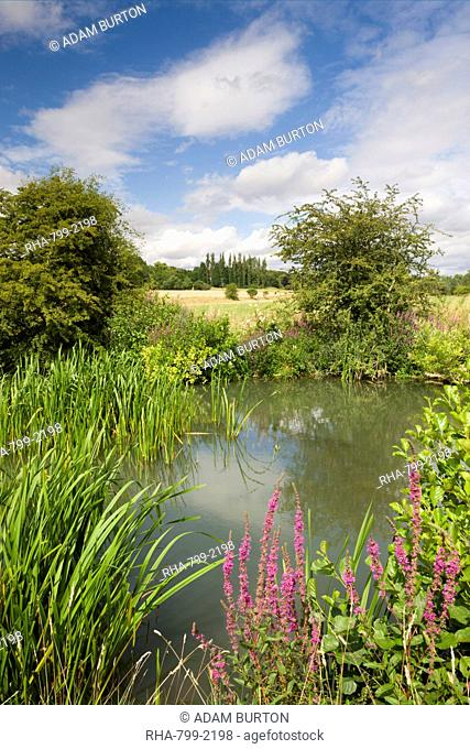 Wildflowers growing beside the River Windrush near Burford, The Cotswolds, Oxfordshire, England, United Kingdom, Europe