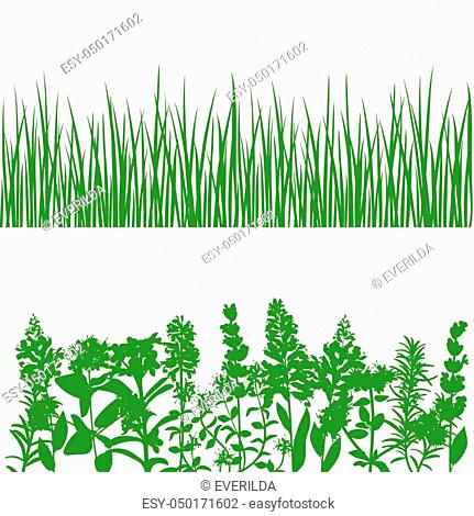 Grass, wild flowers and plants detailed silhouettes. Isolated on white. Herbs garden. For web, wallpaper, decoration, textile, prints banners wrapping packing