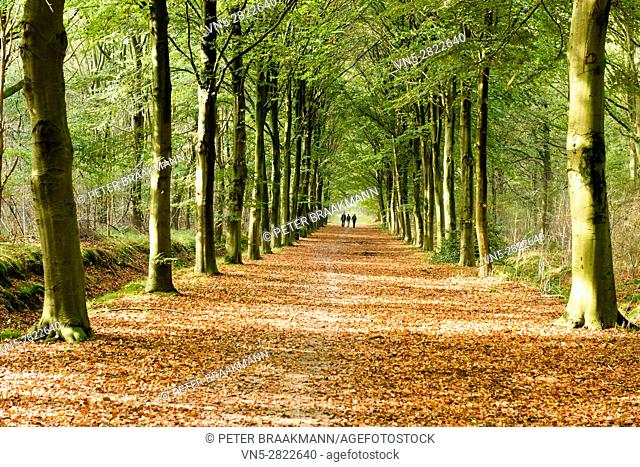 Wouw - People walking in the autumn forest