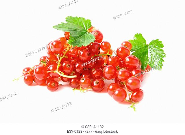Red currant with green leaves