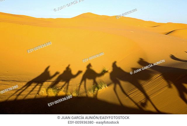 Tourists are led through the dunes to a local oasis on camels