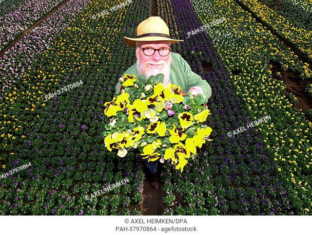 TV gardener John Langley holds a bouquet of pansies at the market garden 'Stender' in Hamburg, Germany, 07 March 2013. The pansies will be planted at the garden...