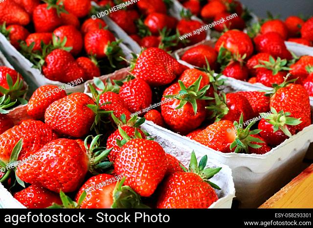 Fresh Strawberries in the shop