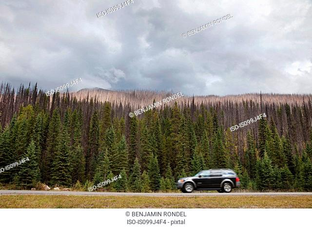 Car on road passing forest, British Columbia, Canada