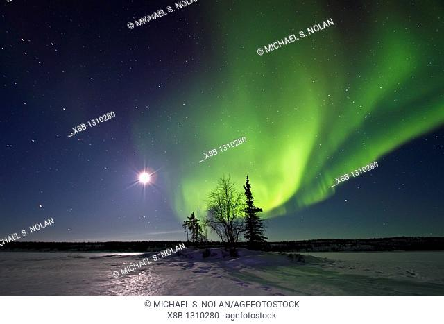 Aurora Borealis Northern Polar Lights and waxing moon over the boreal forest outside Yellowknife, Northwest Territories, Canada