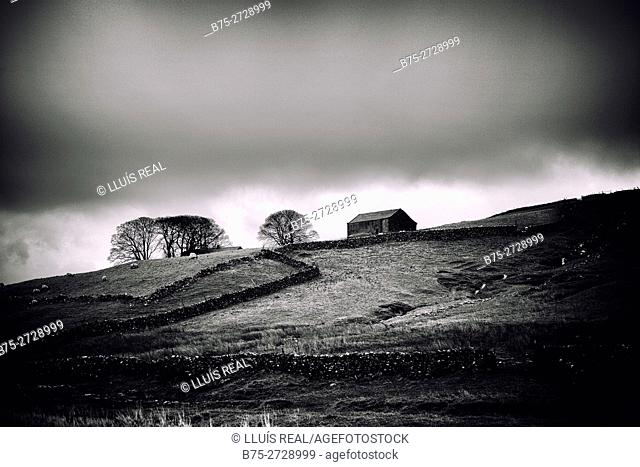 Landscape with clouds, trees and a barn. North Yorkshire, Yorkshire Dales, England, UK, Europe