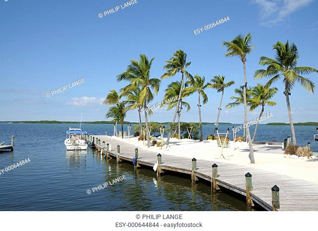 Steg und Palmen auf Florida Keys