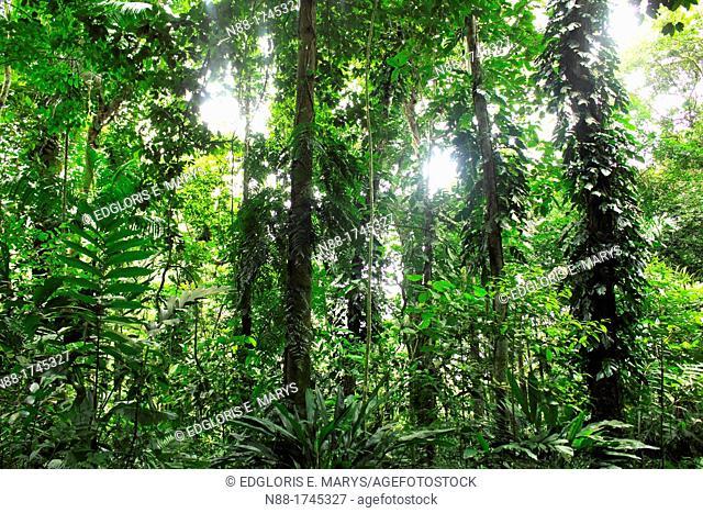 Tropical forest, Venezuela