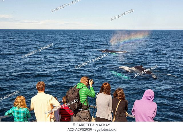 Humpback Whale spouting, (Megaptera novaeangliae), and whale watchers, Witless Bay Ecological Reserve, Newfoundland, Canada