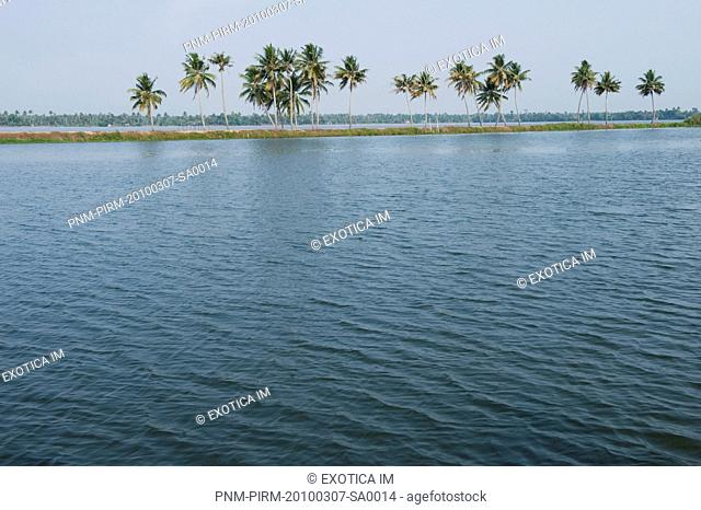 Palm trees at the riverside, Alleppey, Kerala, India