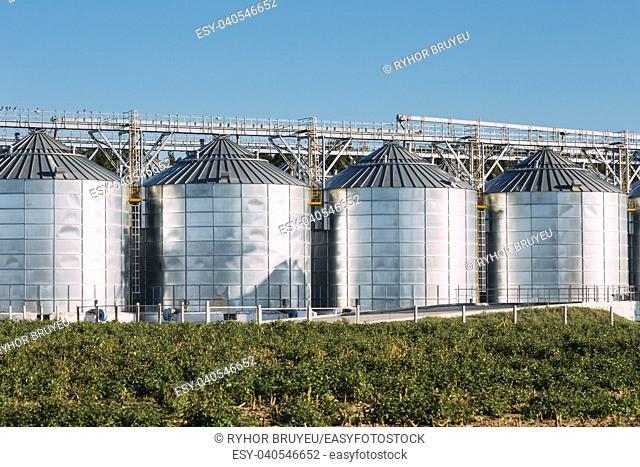 Modern Granary, Grain-drying Complex, Commercial Grain Or Seed Silos In Sunny Summer Rural Landscape. Corn Dryer Silos, Inland Grain Terminal