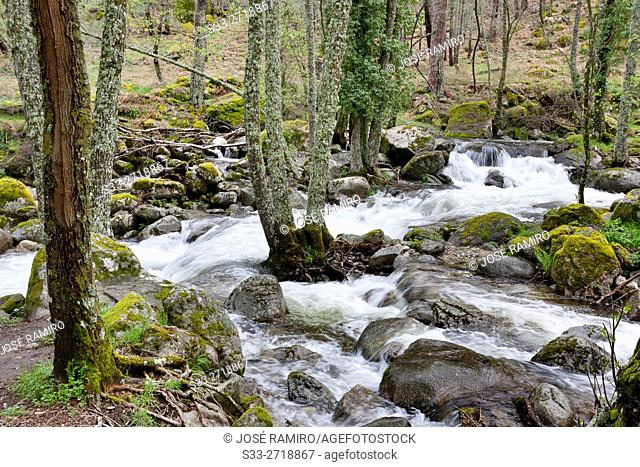 Serrezuelas stream in the Sierra de Gredos. Avila. Castilla Leon. Spain. Europe