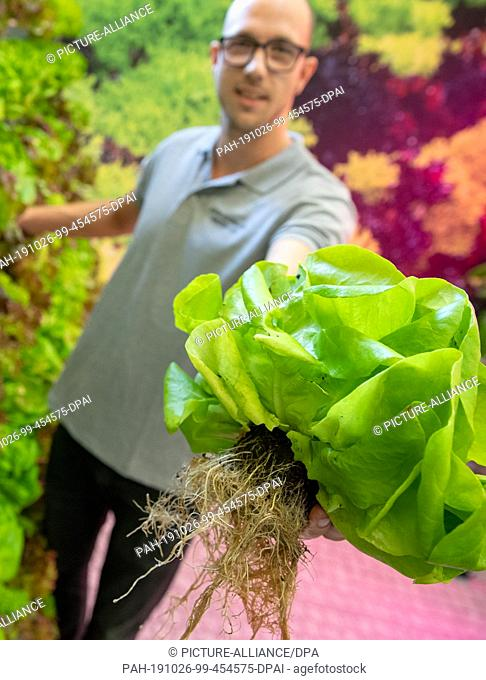 25 October 2019, Bavaria, Nuremberg: Johannes Höfler, chairman of the Garlic Growers' Association, presents a lettuce with root during the press preview of the...