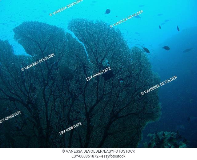 Coral at Bida Noi, a coral reef in the Andaman Sea, Thailand, near Ko Lanta