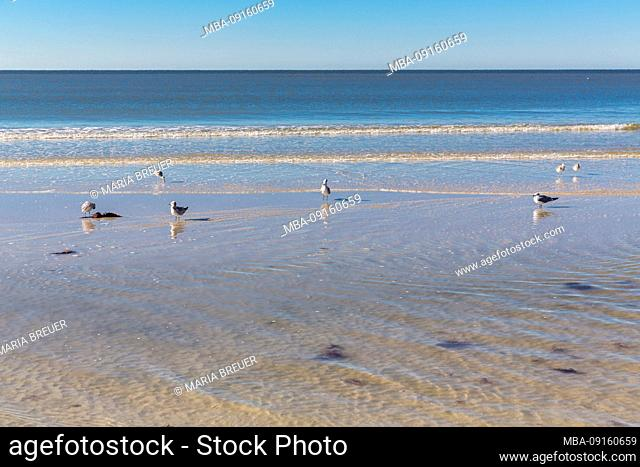 Seagulls, Fort Myers, Florida, USA, North America