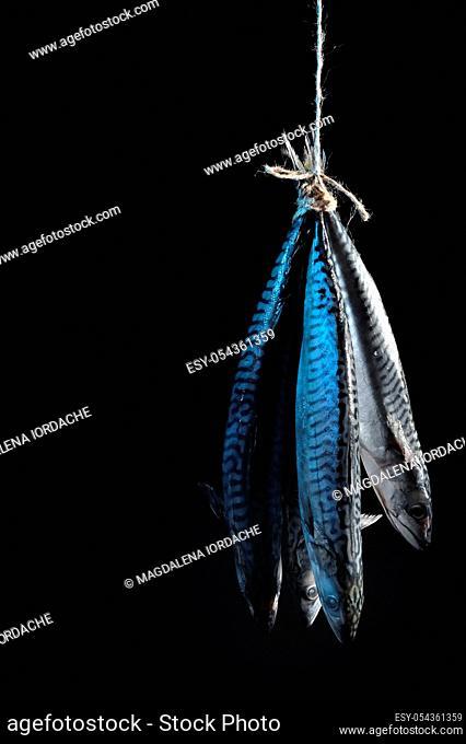 Smoked Mackerel Fish on Rope Isolated On Black Background