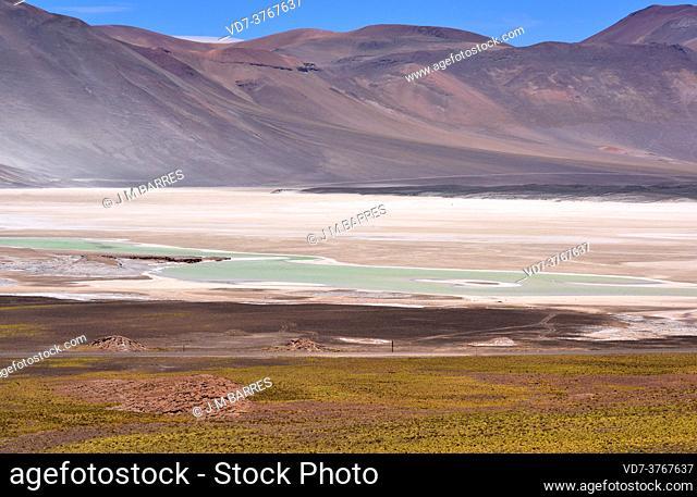 Laguna y Salar de Talar. Salar de Atacama, Antofagasta, Chile
