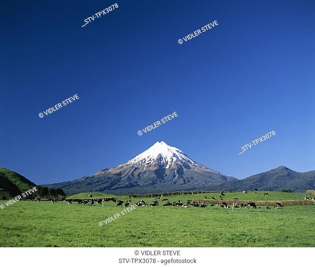 Egmont, Holiday, Landmark, Mount, Mount egmont, Nationalpark, New zealand, North island, Park, Taranaki, Tourism, Travel, Vacati