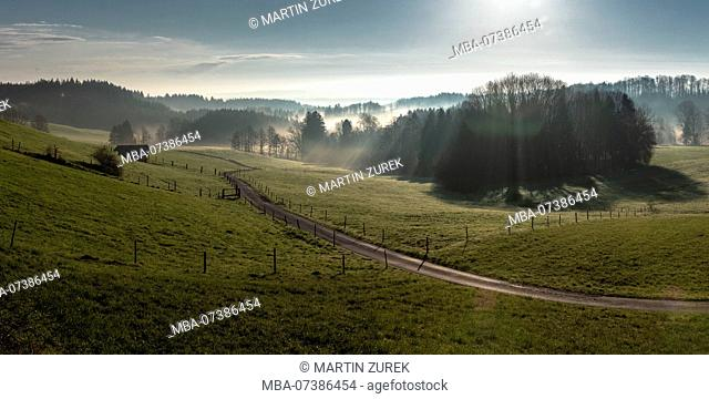 Backlit shot, Allgäu valley in the morning mist on a sunny day, Germany, Allgäu