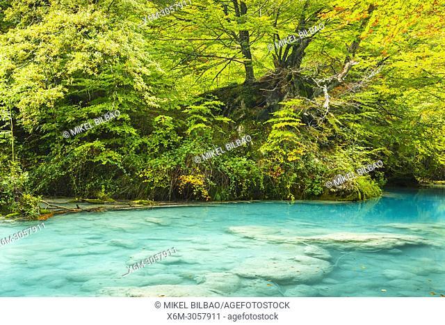 Beechwood and Urederra river. Nacedero del Urederra Natural Reserve. Urbasa y Andia Natural Park. Navarre. Spain