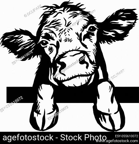 Peeking Calf Hand drawn. Calf, bull, cattle vector illustration. Farm animal collection. Black and white graphic on white