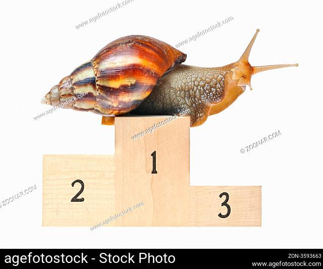 Big snail on podium isolated on white background