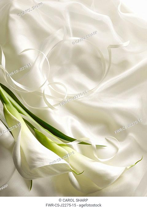 Arum lily, Zantedeschia, Overhead graphic view of two flowers with leaf laid onto silky white fabric with ribbon creating a wedding style look
