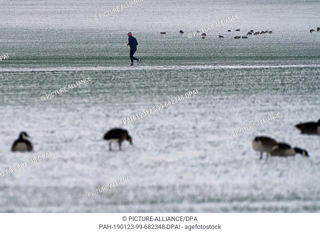 23 January 2019, North Rhine-Westphalia, Köln: A jogger walks through the snow-covered fields where wild geese search for food