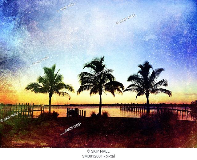 Three palm trees on the shore of the Manatee River