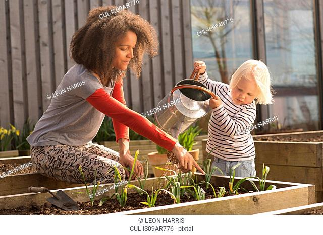 Mid adult woman helping son water plants in raised bed