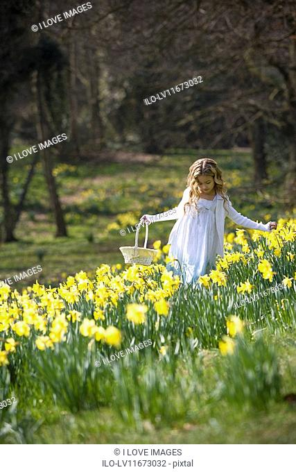 A young girl holding a basket walking through a field of daffodils