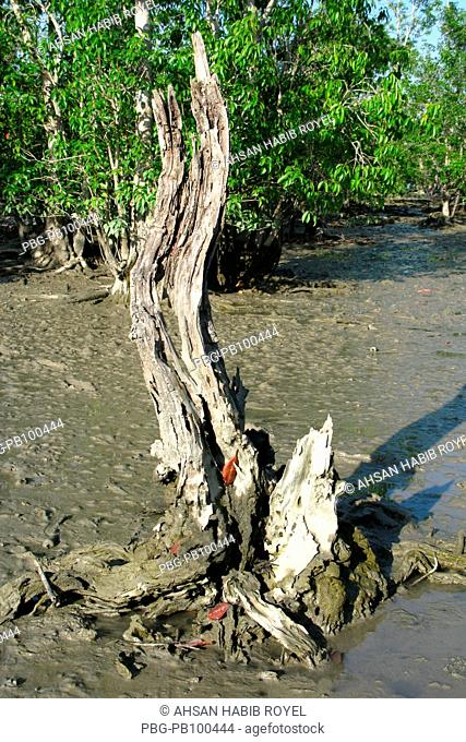 A view of Sudarbans, a UNESCO World Heritage Site and a wildlife sanctuary The largest littoral mangrove forest in the world, it covers an area of 38,500 sq km