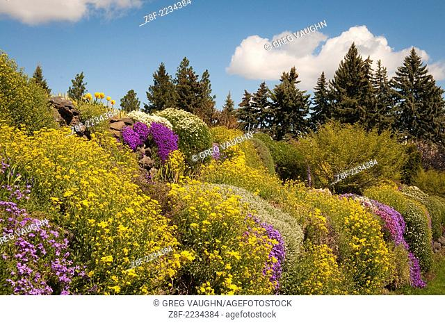 Basket of Gold and Spreading Phlox flowers at Manito Park in Spokane, Washington