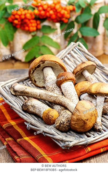 Mushrooms in the basket. Autumn dish